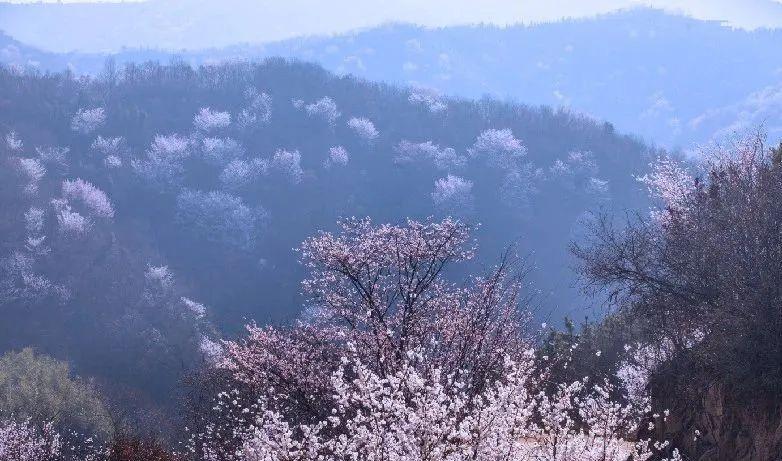十八潭野樱花烂漫盛开!粉色柔情如画山水正当踏青赏花季