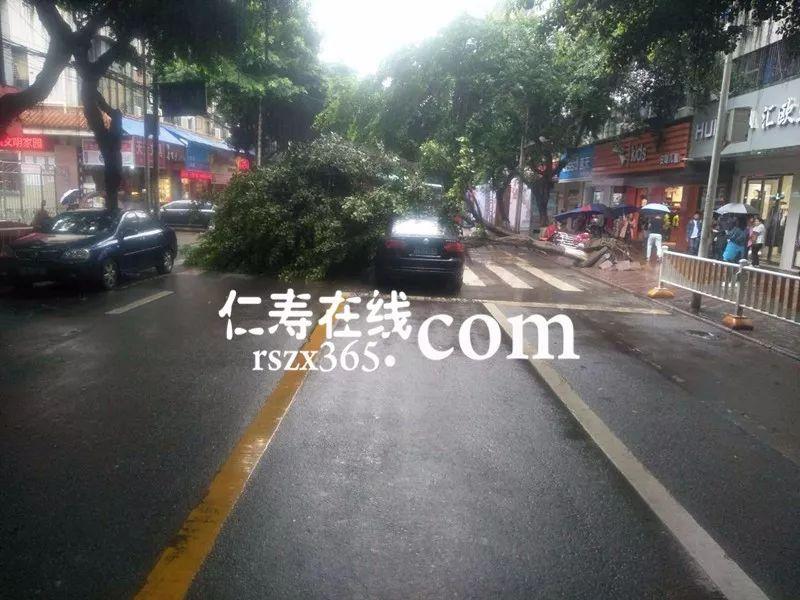 突发!新南街一大树被连根拔起,横卧马路中央,一汽车被砸中...