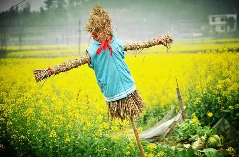 """惊艳!梦里水乡""""稻草艺术文化节""""开园了!免费门票无限量送、送、送..."""