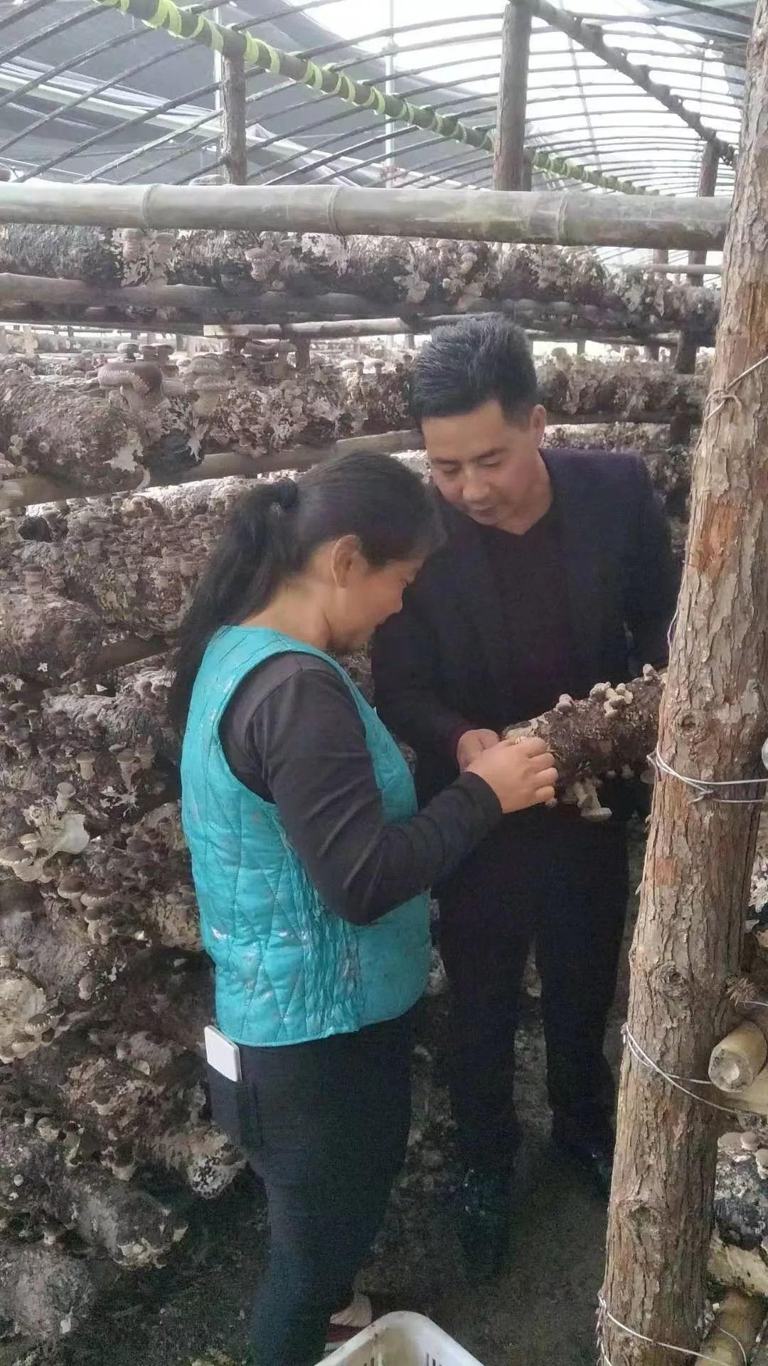 金寨王汉青,种植香菇,带领乡亲致富!