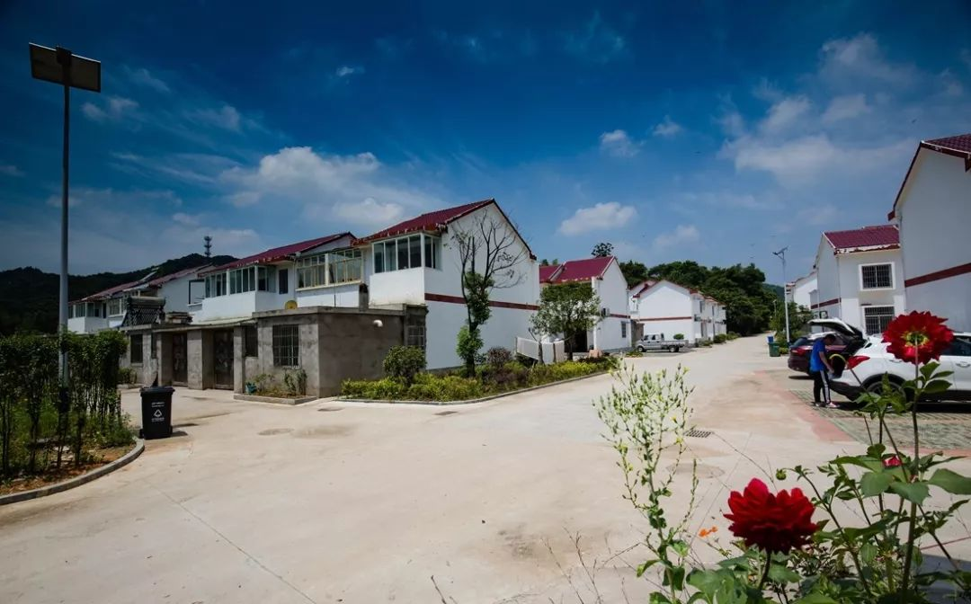 老家澳门威尼斯人赌场开户丨三湾村、金刚台村、苏畈村
