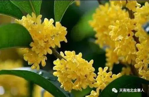 致敬先烈|袁大桂:大别山永恒的桂花
