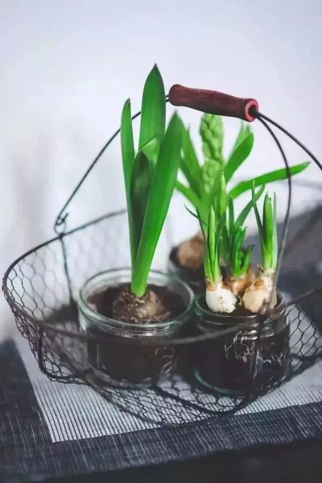 一个月不浇水,照样养出艳丽鲜花,养花的不看就亏大了!