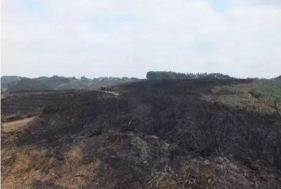 梧凤焚烧树枝引发山火夹江1村民被处罚