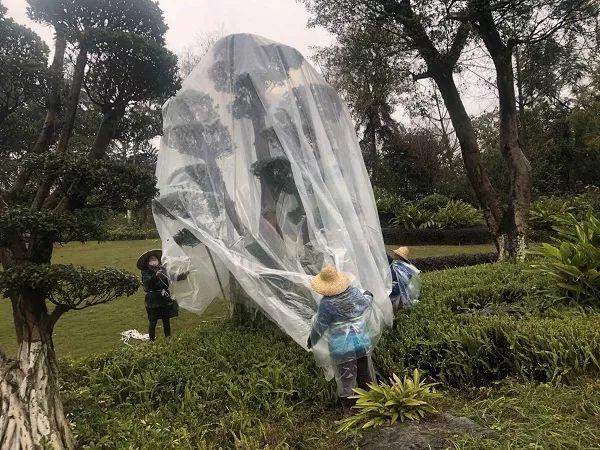 """泸州这天气有好冷,街上的树子都穿""""棉袄""""了"""