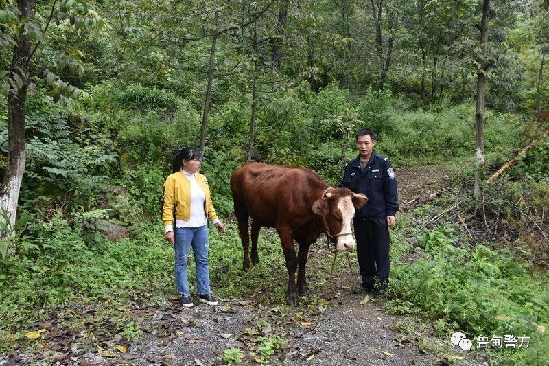 �甸水磨派出所及�r�槿罕�找回一�^母牛