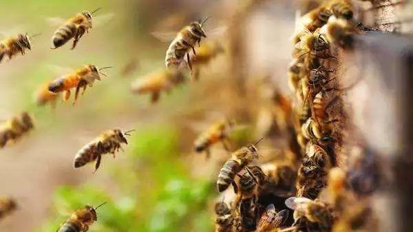 """泸州真人版""""熊出没"""",两小孩为偷吃蜂蜜也是拼了……"""