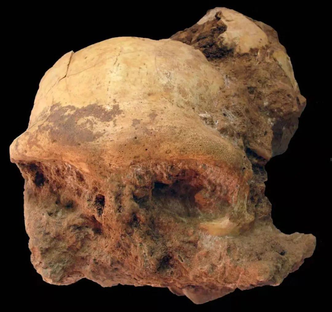 """30万年前的""""安徽人""""长啥样?"""