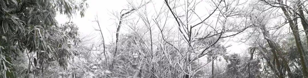 下雪啦!�o州�@里�y�b素裹,太美了!