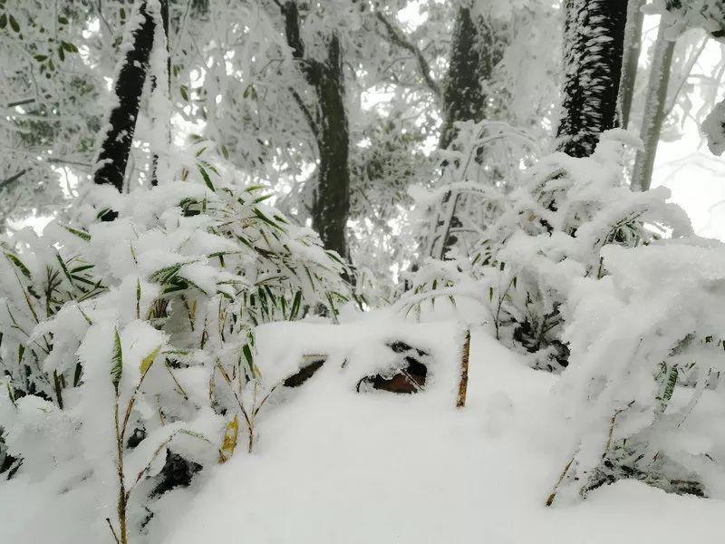 刚刚拍的,泸州古蔺这里的雪景美爆了!
