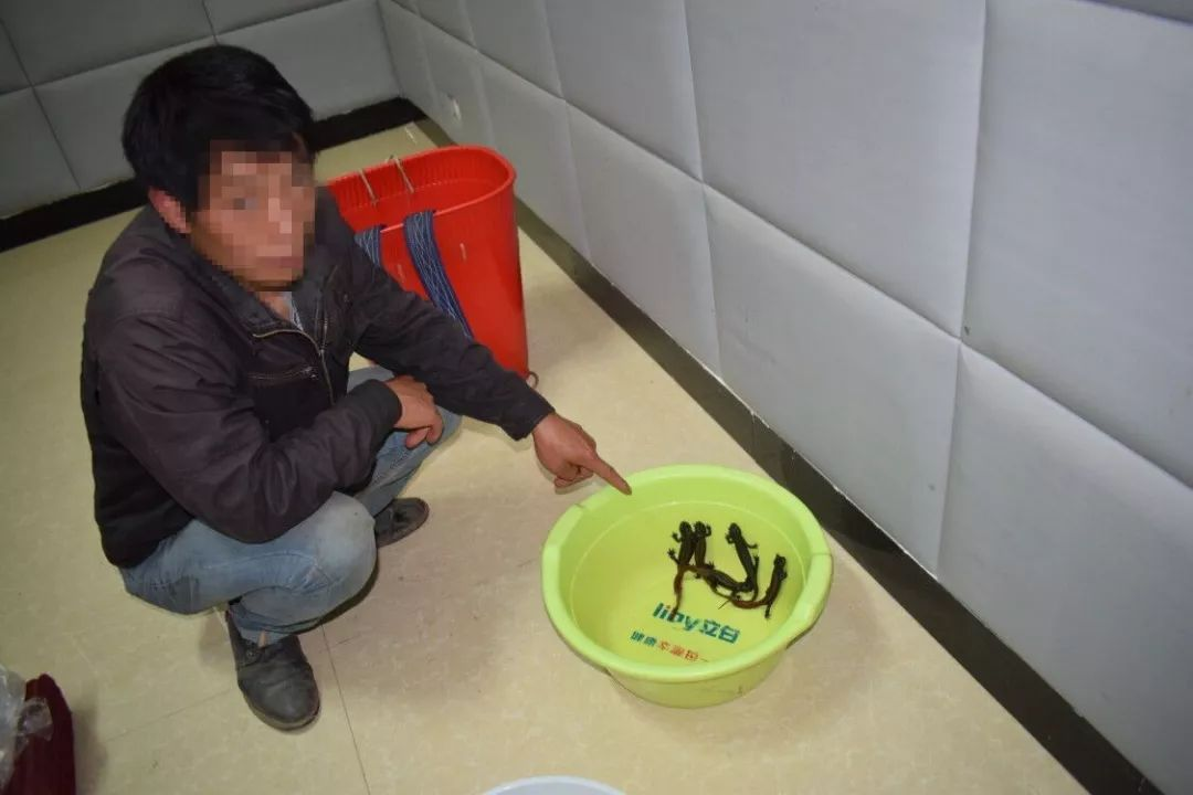 永善一男子因涉嫌非法猎捕、出售野生动物罪被依法起诉