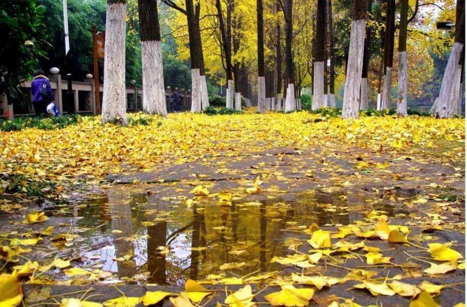 泸州的亲们,你喜爱的秋日阳光已到货~~~
