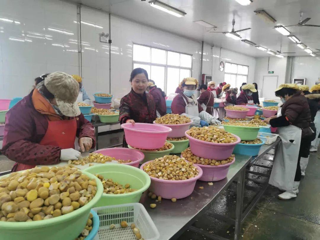《中国妇女报》聚焦金寨:大别山里的巾帼脱贫奋斗志