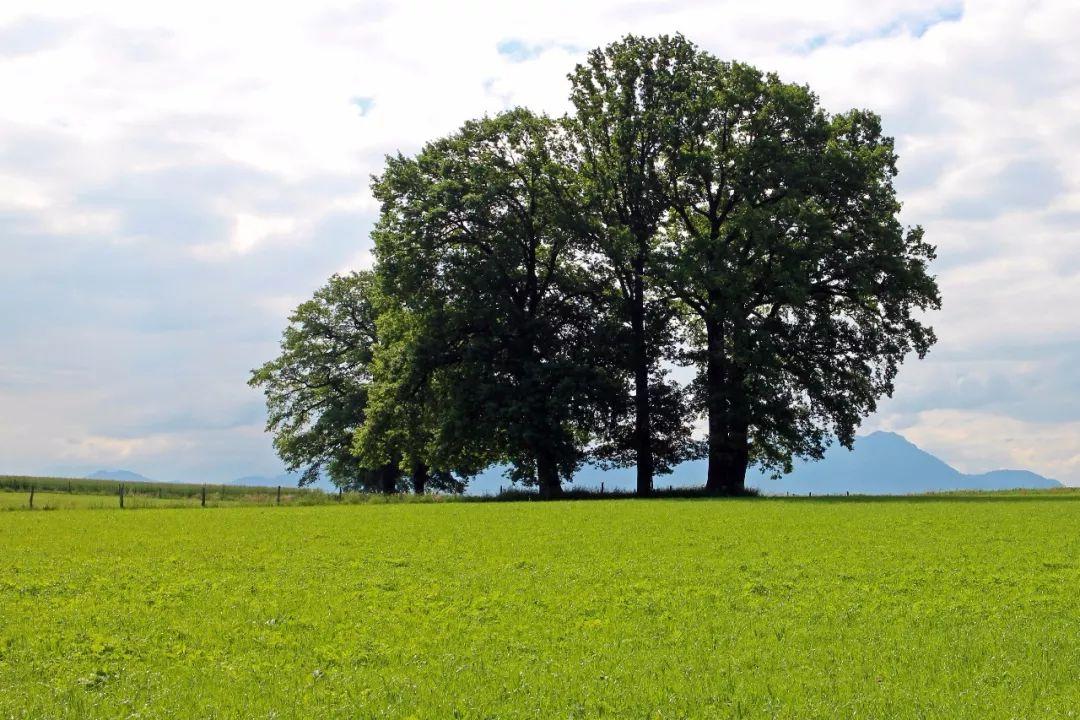 欲为大树,莫与草争