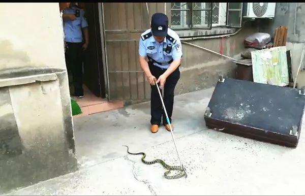 老太睡夢中疼醒了,坐起來一看魂都飛了:一條大蛇在咬自己的腳