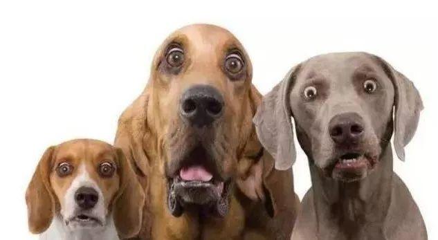 冬至有人毒狗?好多家都遭了!�o州警方雷霆抓捕偷狗�\……