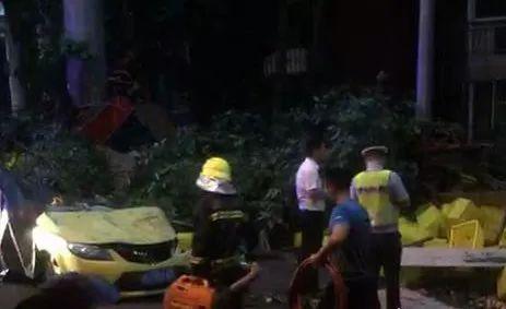 网传泸州江都花园外市民哄抢散落桃子,民警:不属实!