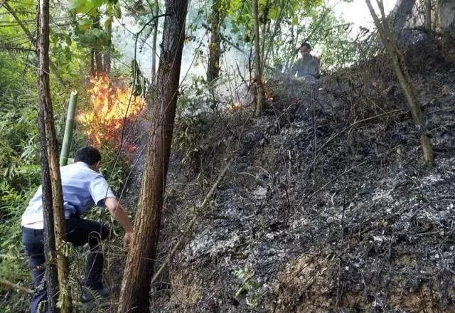 泸州合江一山林突发火灾,70度陡坡警民联手灭火