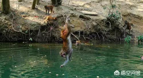 新宁有水猴子(水鬼)吗?答案是...