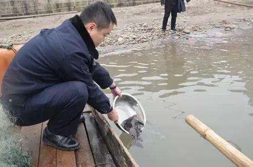 泸州长江中意外捕获国家二级保护野生动物――胭脂鱼,已放生