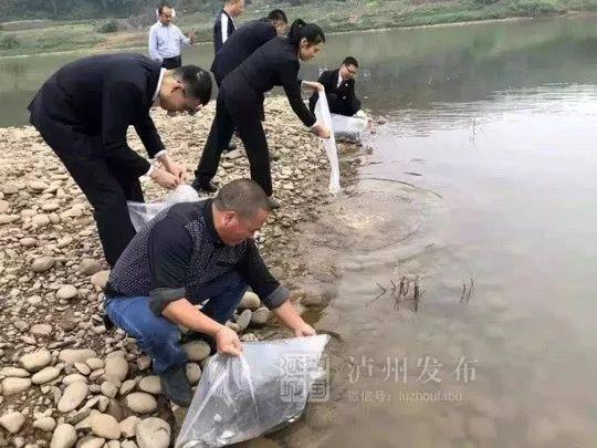 泸州男子非法电鱼2.5公斤,法院这样判决让人拍手称赞