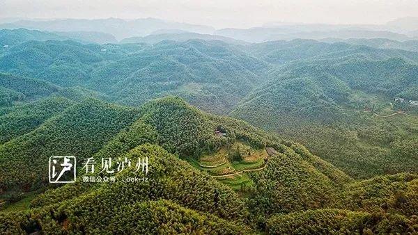 媲美蜀南竹海丨泸州这个景区气温比城区低5―8℃,还不收门票