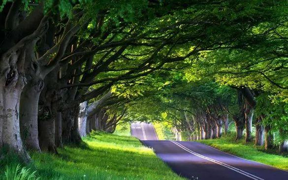 道路规划大揭秘,泸州又将出现一条高颜值道路,而且...