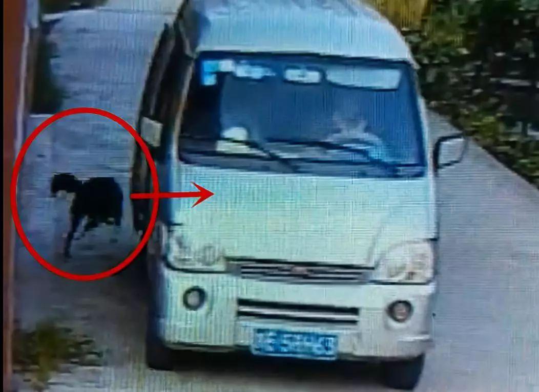 泸州破获专业偷狗贼:钩子拖上车,盗狗上百条