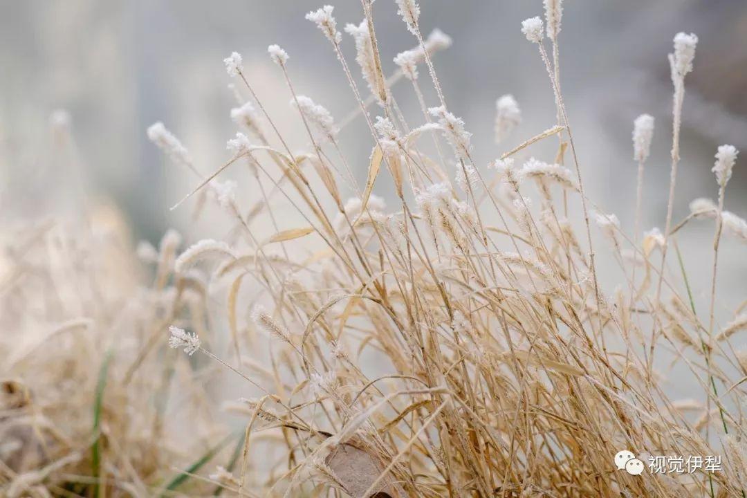 冬,给你遥寄一份暖