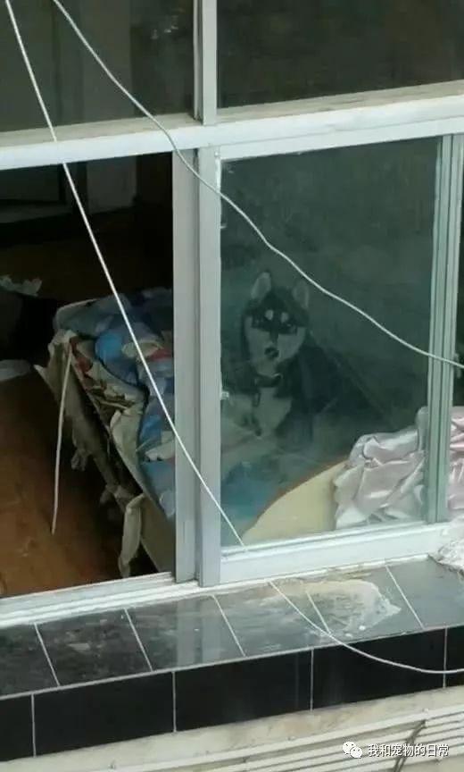 看见楼下住户家里被翻的乱七八糟,拿出手机录像放大画面后哭笑不得!