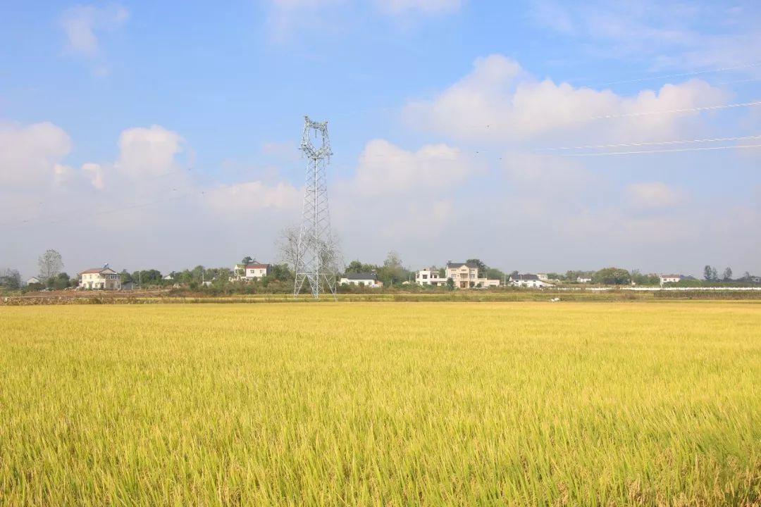 谷雨春2019新米上市:好米知食节当季乃丰收