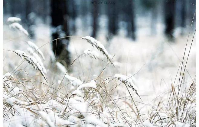 雪,凝固了冬日最美的时光? 微言夜读・经典