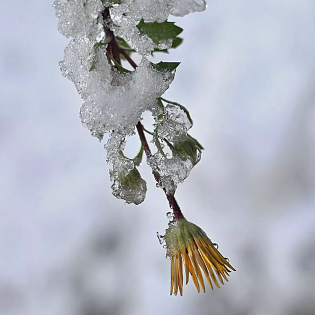 民间超有用的专治咳嗽的小秘方,这个冬天就靠它了!