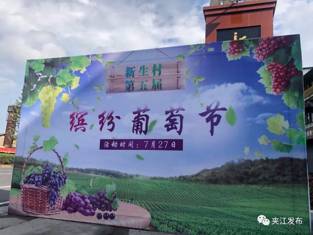 吃葡萄,看表演~夹江葡萄节来啦