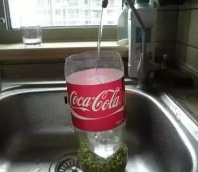 """一个空可乐瓶,一把绿豆,3天窜出满满一盆豆芽!""""好养""""又好吃"""