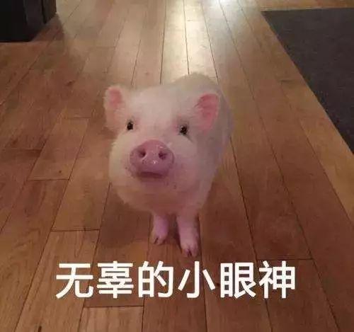 国家发话了,养猪最高补助500万!在仁寿的要组队养猪吗?