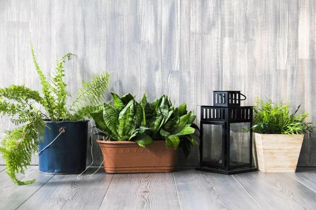 偃师人注意:这些绿植真能吸甲醛!然而更有用的是…