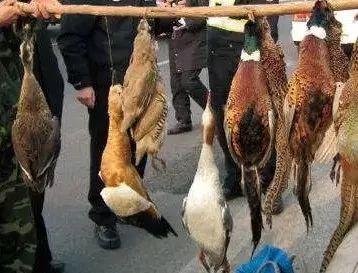 六安一男子因嘴馋非法捕杀野生动物被抓获!
