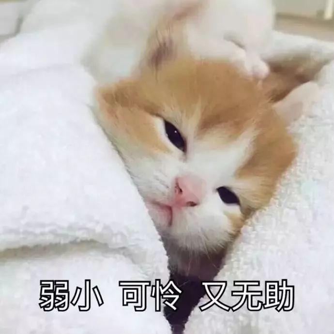 """高�仃�雨�R�w,火�t下�_水!洛�近40℃+""""最虐""""40天�砹�,�直..."""