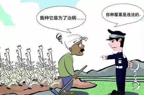 新蔡临县又有两人种植这个被处罚……