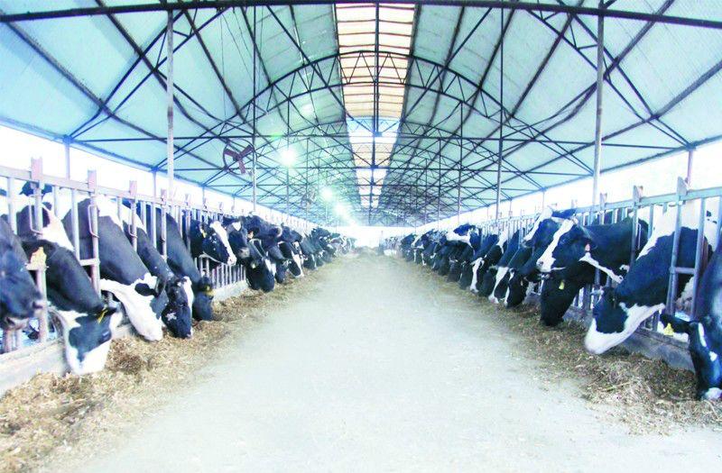 莱西:实施五项工程发展现代畜牧业