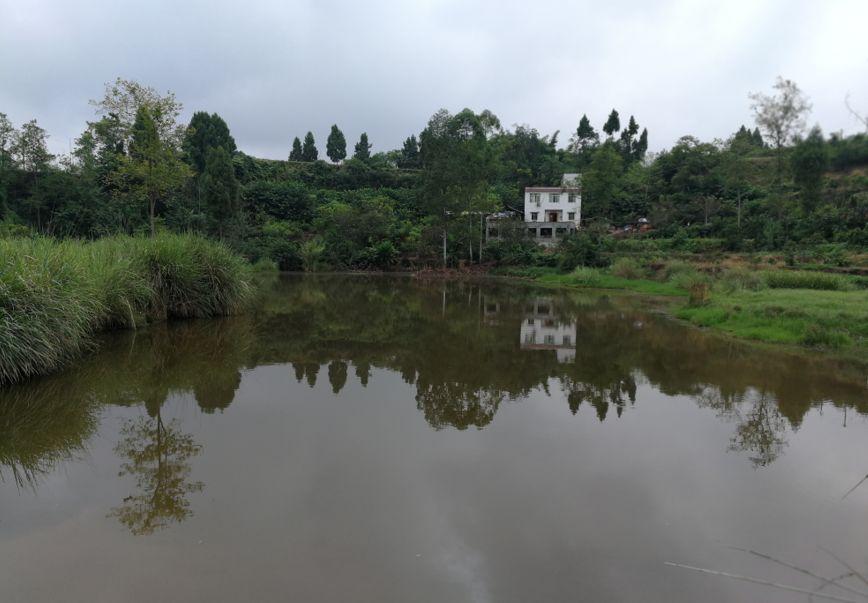 仁寿农村水库钓鱼就是安逸,一条比一条大,都是翘壳鱼