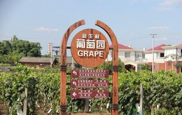 """去""""最美乡村""""吃免费葡萄,夹江的小伙伴们赶紧约起来!"""
