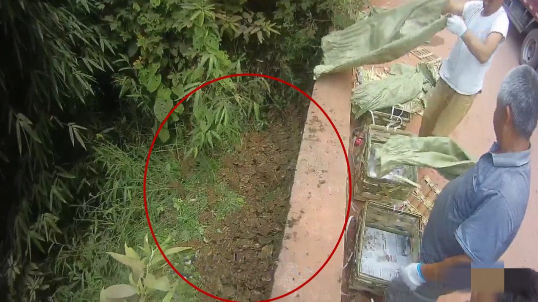 泸州一男子用癞疙宝充当牛蛙售卖,已售出6000斤