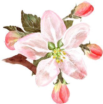 千亩樱桃花盛开!赶紧,去追寻仁寿最早的春天!