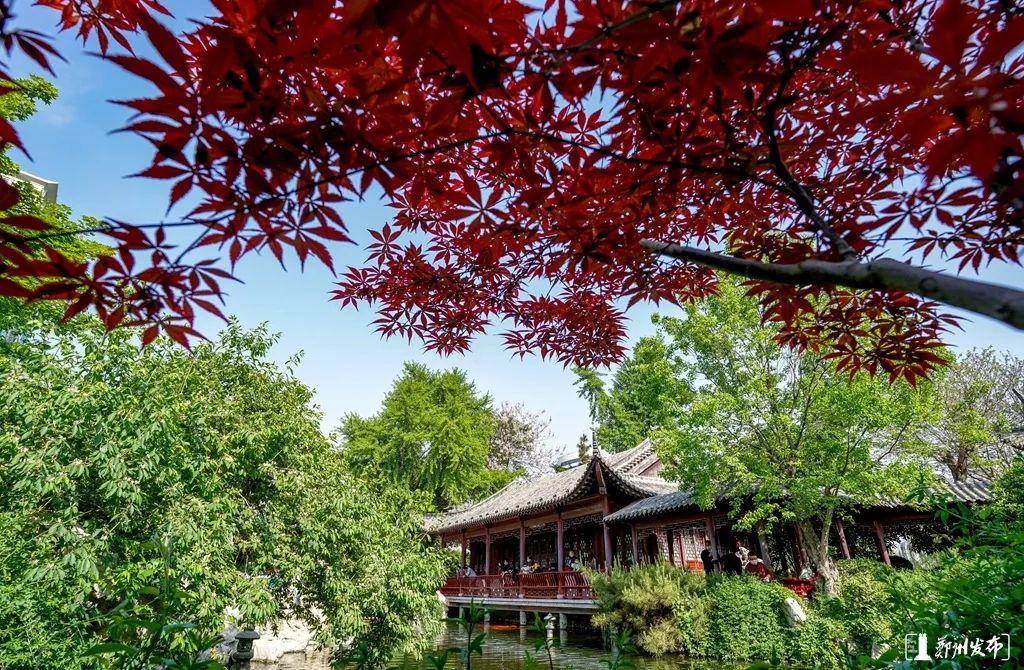 郑州闹市区的这个苏式园林,你去过吗?让眼睛放松一下