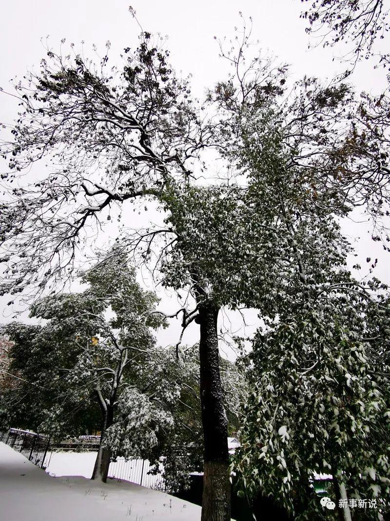 雪�w大悟�S���X,�@�F�F凇景�^!宛若水墨��、美�美�J
