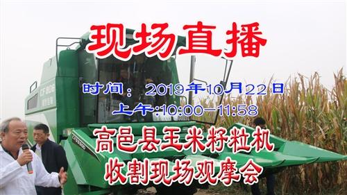 現場直播:高邑縣玉米籽粒機收割現場