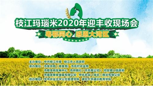 """枝江玛瑙米2020年迎丰收暨粤鄂同心·""""感恩大湾区""""现场会"""