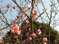 【原创】春天来了,是时候到阜南大街上溜达溜达,看看春景了~